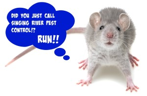 Call the Florence Alabama pest control team to get these rodents on the run!