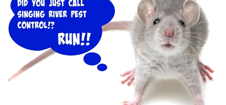3 Reasons Why Mice Are Invading Your Home |Florence Alabama Pest Control